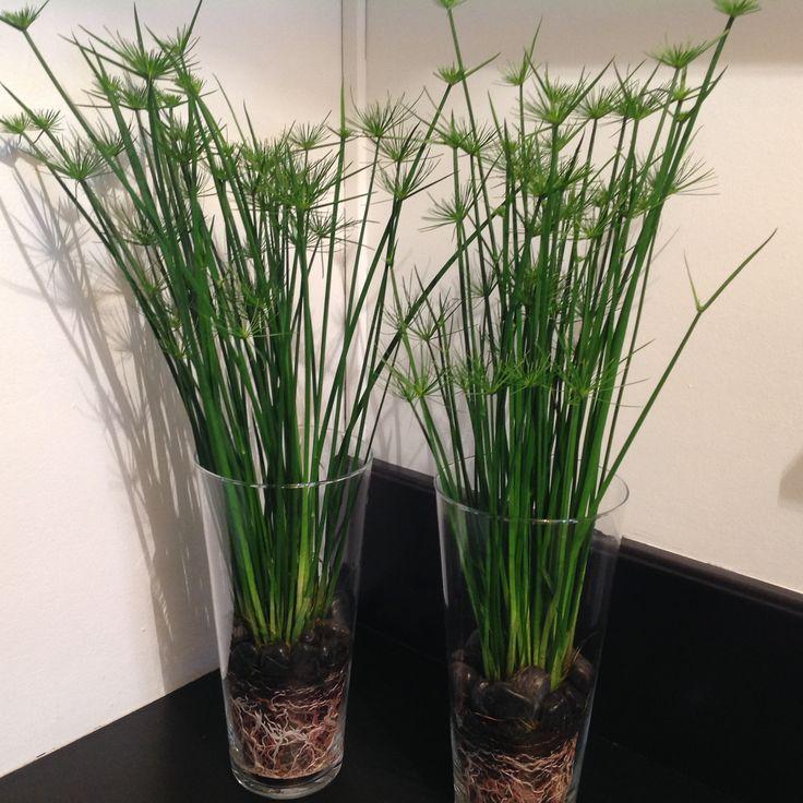 Des jardini res et pots design pour votre int rieur - Jardiniere design interieur ...