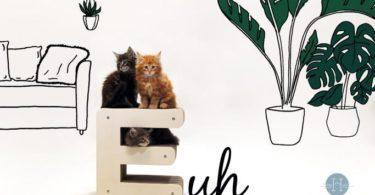 blog-homycat-comment-choisir-son-griffoir-pour-chat_1600x