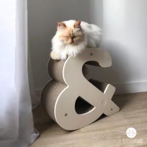 griffoir design chat
